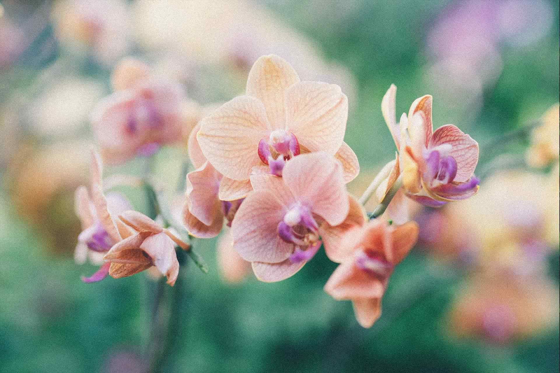 How to water orchids